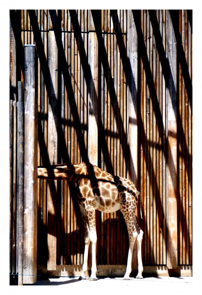 """Camouflage"" par Alea (Wipplay.com)"